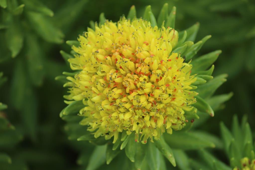 flower in valley
