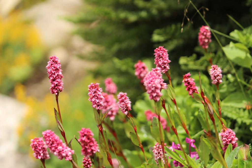 Beautiful flowers valley