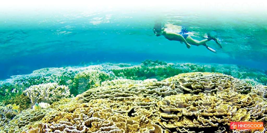 Coral Garden in Sri Lanka