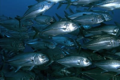 Fish Out of Water; the State of Fish Stocks in the South China Sea [Magazine Feature]