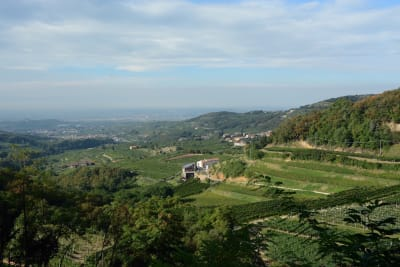 The Many Faces of Valpolicella Wine
