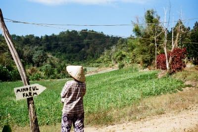 The Zero Waste Diaries: Travelling Back to Basics