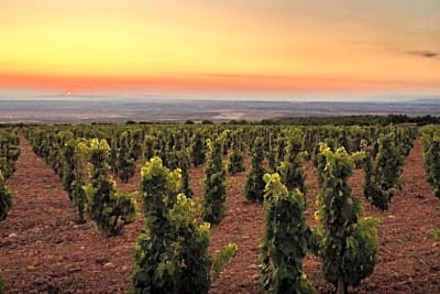 5 Tips for Spanish Wine Lovers