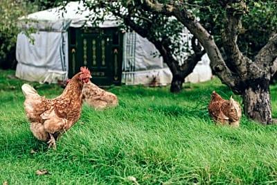 LONG READ: Farming for the Future