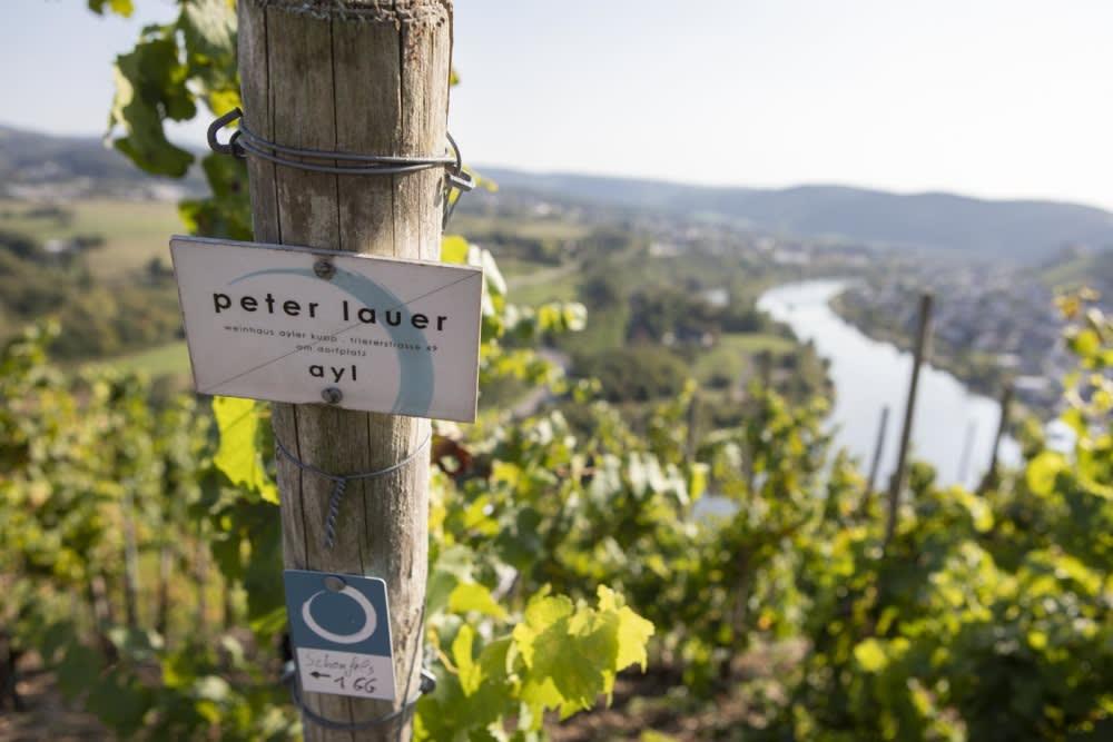 Rewriting Wine 101: Weingut Peter Lauer