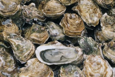 Oyster SOS: Millions of Oysters Coming to Hong Kong