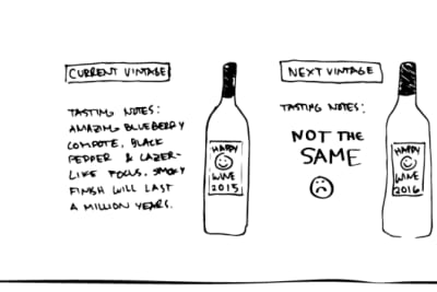 Rewriting Wine 101: Why Are People so Fussy about Wine Vintages?