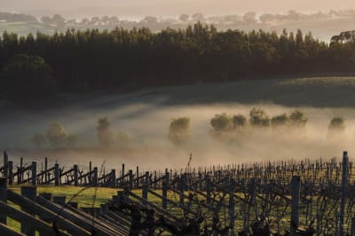 Rewriting Wine 101: Australia's Cool-Climate Wine