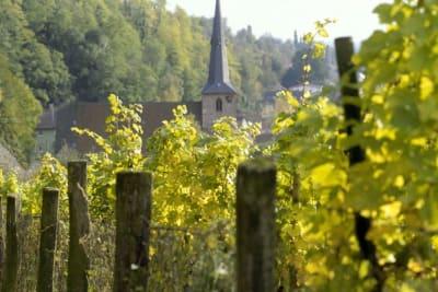 Rewriting Wine 101: Spätburgunder