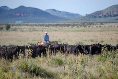 Beef and Sustainability