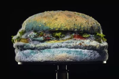 Mouldy Whopper