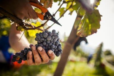 Alto Aldige Wine Showcase