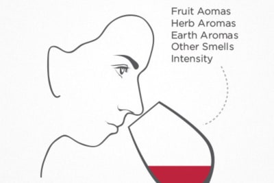 Rewriting Wine 101: Taste Like a Pro Series – Smell