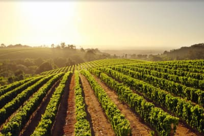 Wine Impala Brings the South African Winelands to Hong Kong