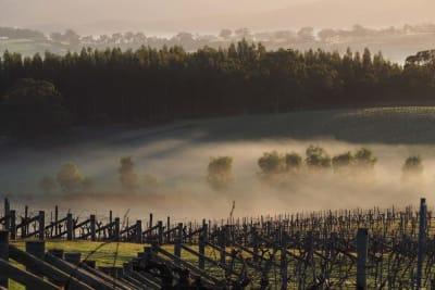 Rewriting Wine 101: Australia's Cool-Climate Wine
