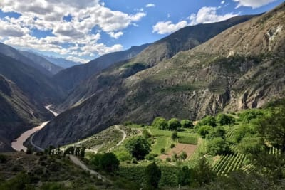 Chinese Wines Soar to New Heights with Moët Hennessy's Ao Yun 2015