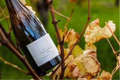 Rewriting Wine 101: Wine from the Other Side of Australia