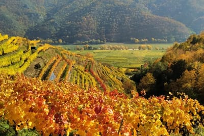 Rewriting Wine 101: DRC