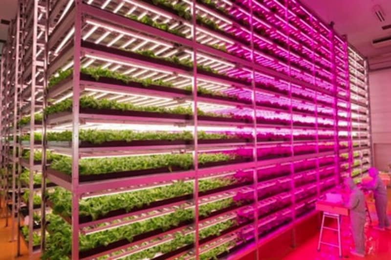 World's Largest Indoor Farm