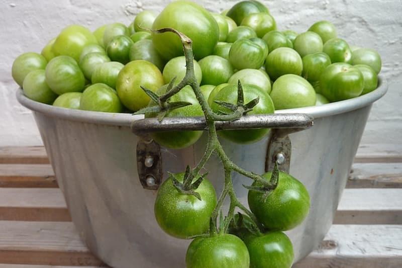 Tomatillos Versus Green Tomatoes