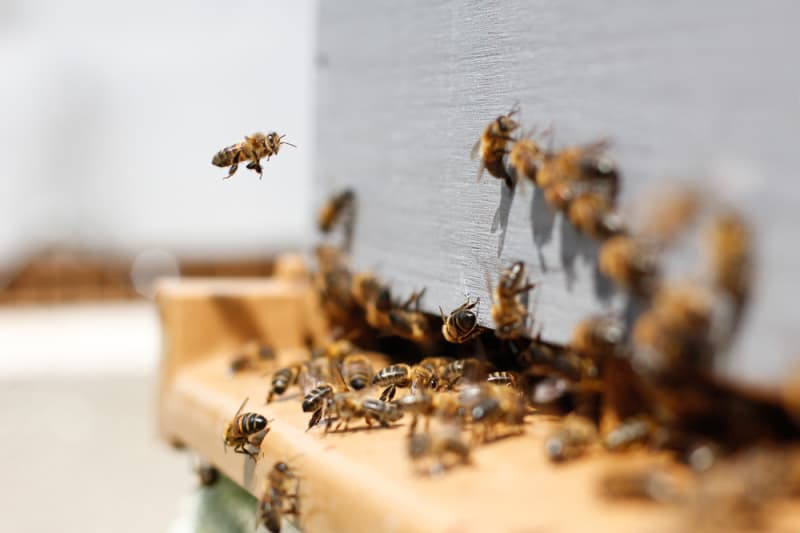 Food Tech Bites: A Vaccine for Bees