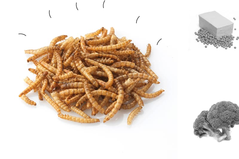Dining on Mealworms and Flies