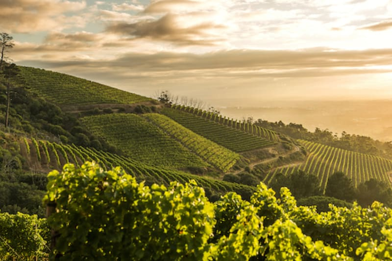 The Evolution of South African Wine