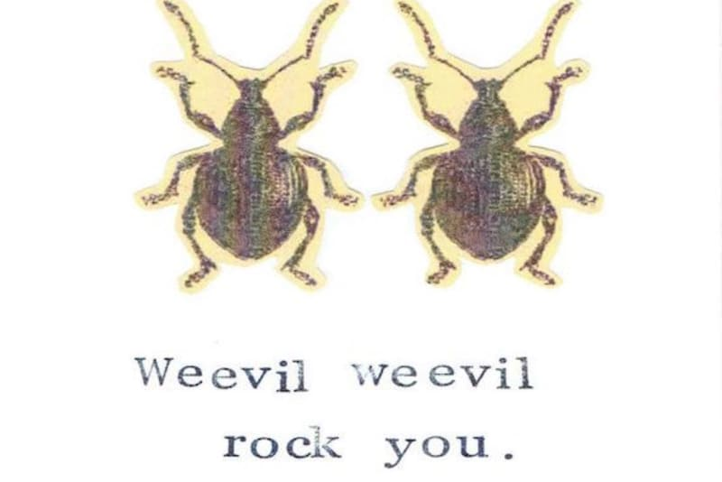 Hoarders, Take Note: Beware the Evils of Weevils