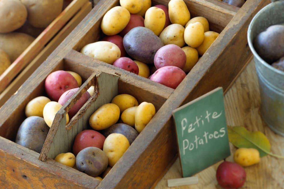 The US Potato Chef's Competition