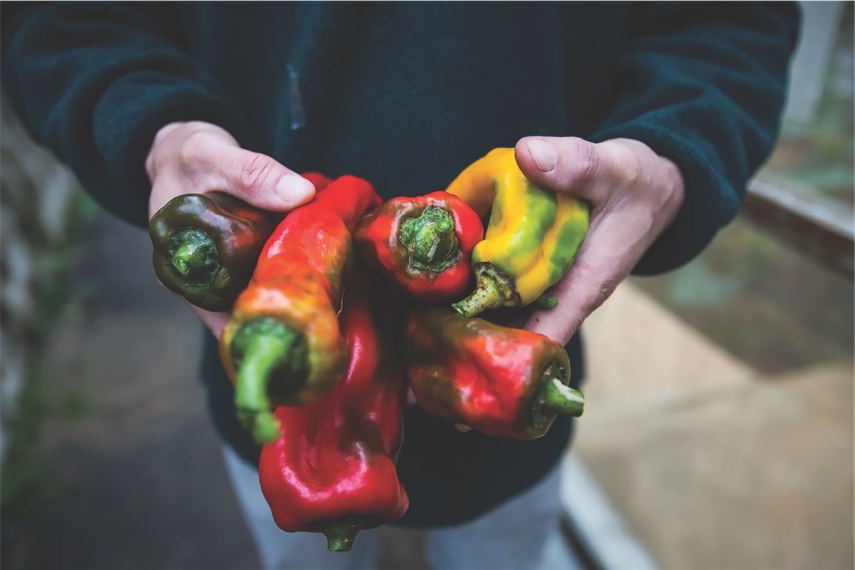 Where to Buy Sustainable Produce in Hong Kong