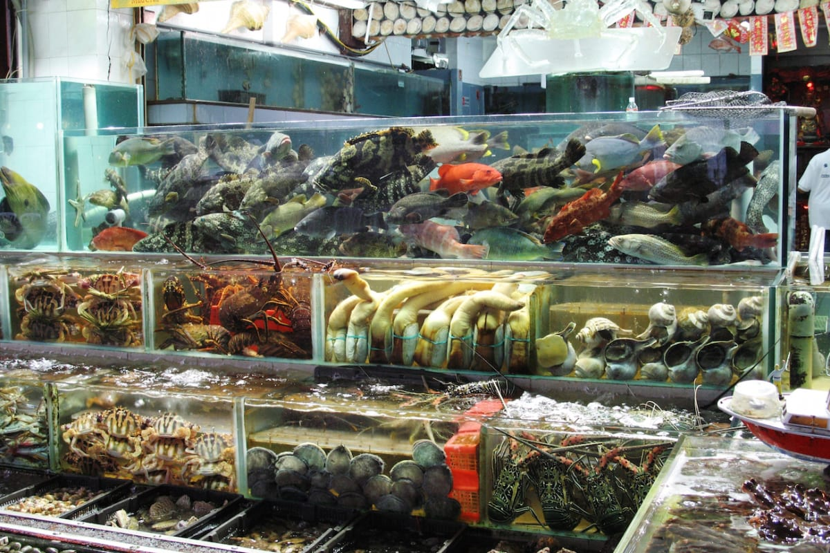 Do You Know Where Your Seafood is Coming From?