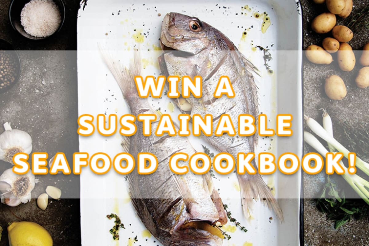 Giveaway: Cookbook by Chef Matthew Dolan