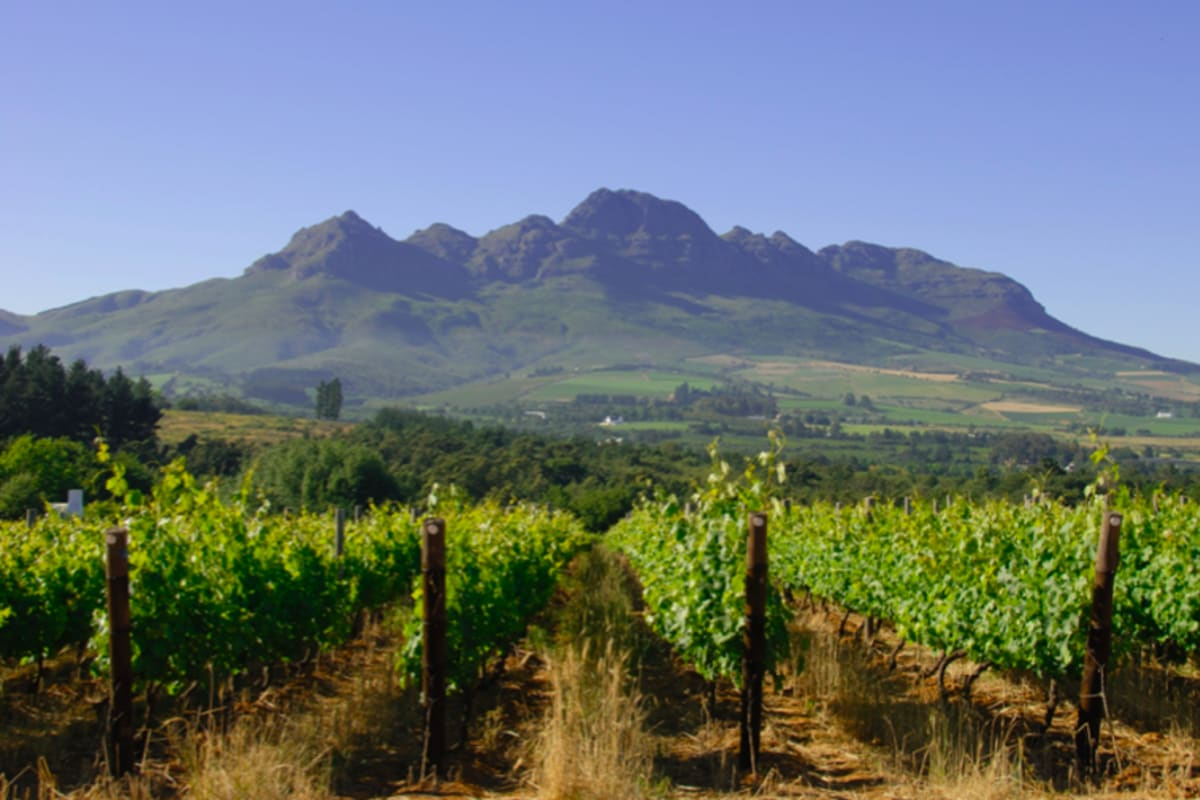Democracy and Diversity: Discover South African Wine