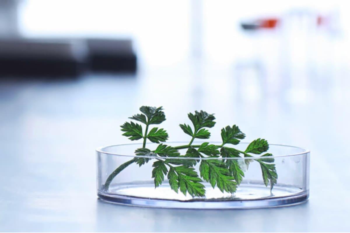 APPLICATIONS OPEN: Brinc Spring 2020 Food-Tech Accelerator Programme