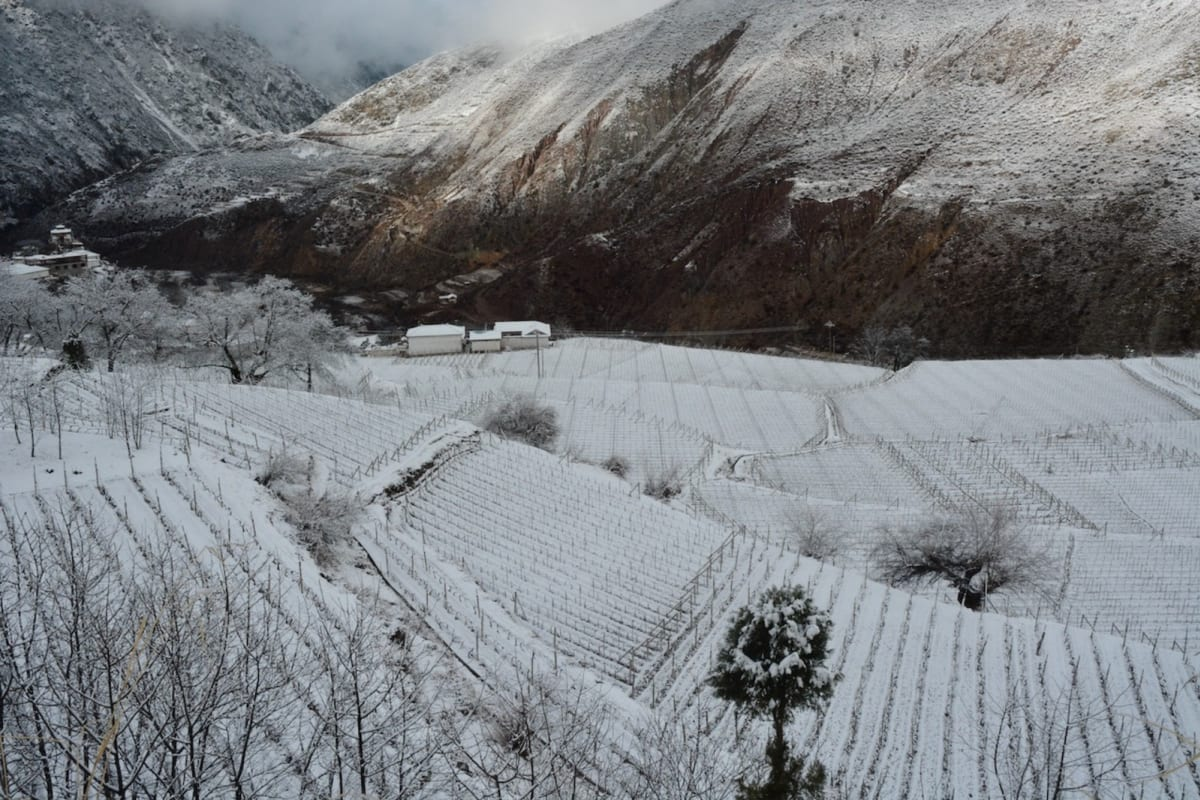Rewriting Wine 101: China's Low-Latitude and High-Altitude Wines