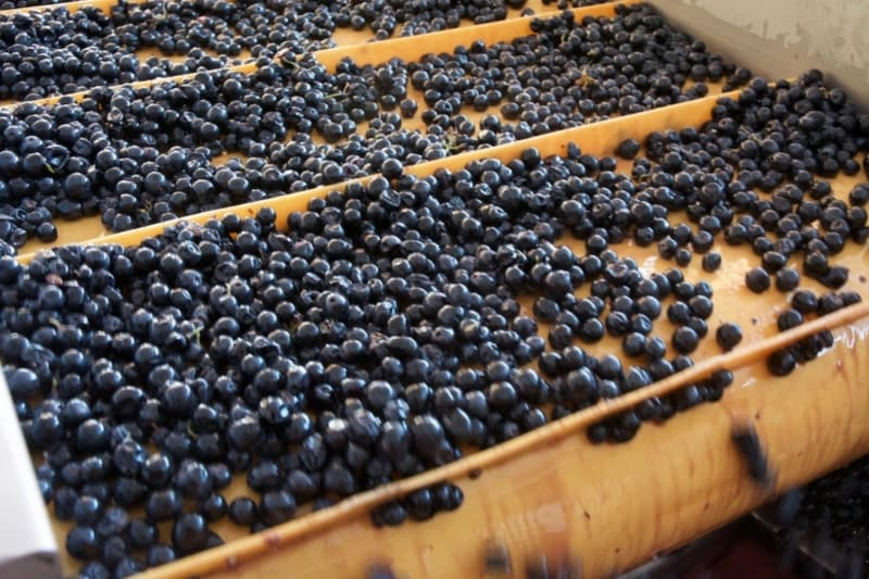 Rewriting Wine 101: What is Tannin?