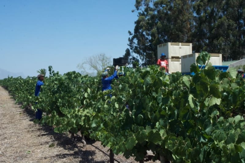 Rewriting Wine 101: South Africa, Making Wine Better