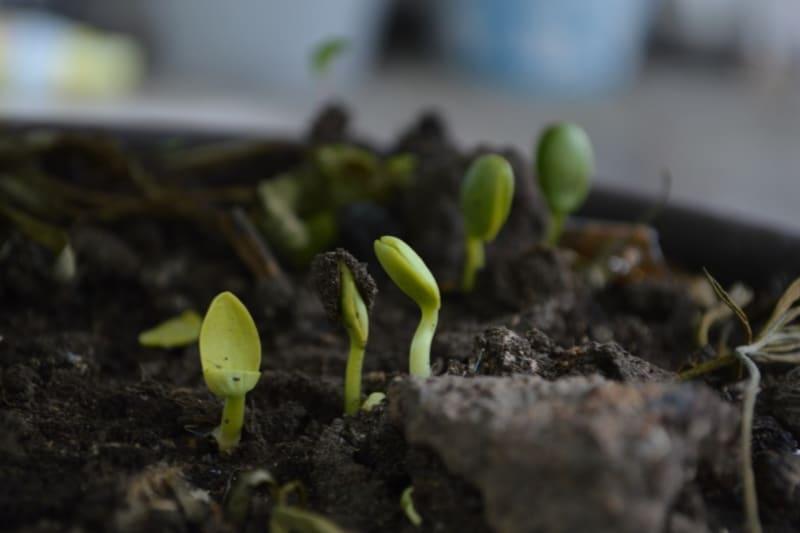 The Zero Waste Diaries: Composting 101
