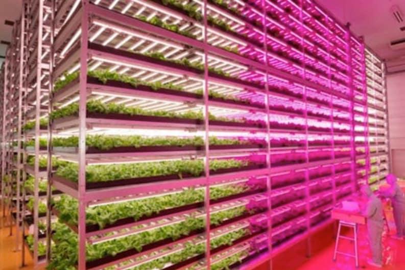 World's Largest Indoor Farm
