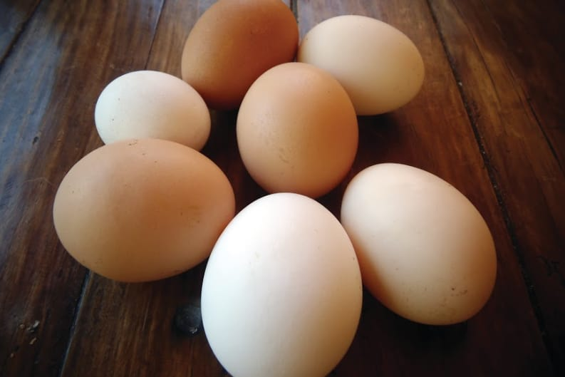 The Humble Egg