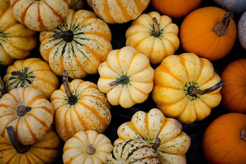Falling for the Foods of Autumn
