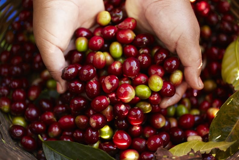 Nespresso's New Limited Edition Coffee Flavours Hail from Lake Kivu and the Highlands of Chiapas
