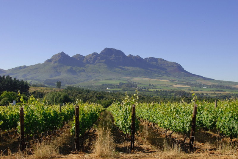South African Wine Festival