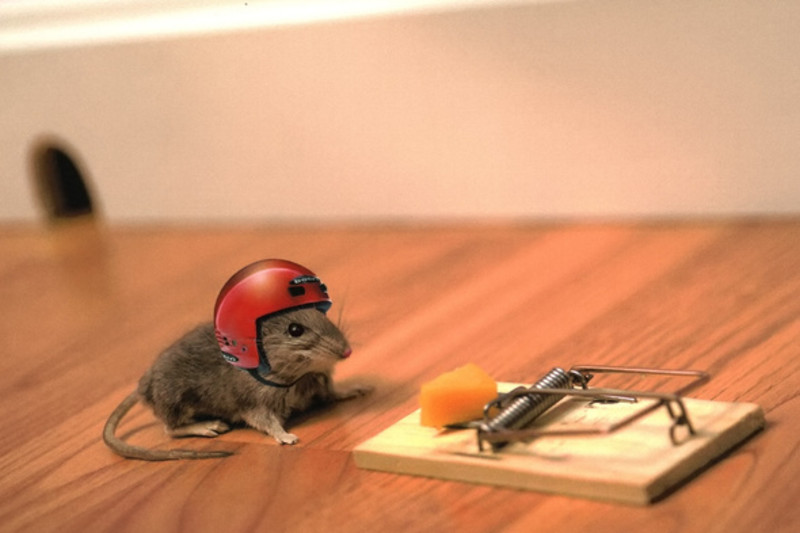 Mice Don't Like Cheese #cheeselovers #funfact