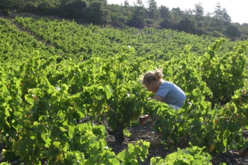 Rewriting Wine 101: Terroir