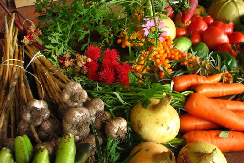 Buddha's Garden and Foodie's Veggie Union
