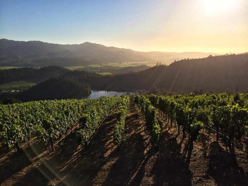 Napa Valley vineyards (courtesy Napa Valley Vintners)