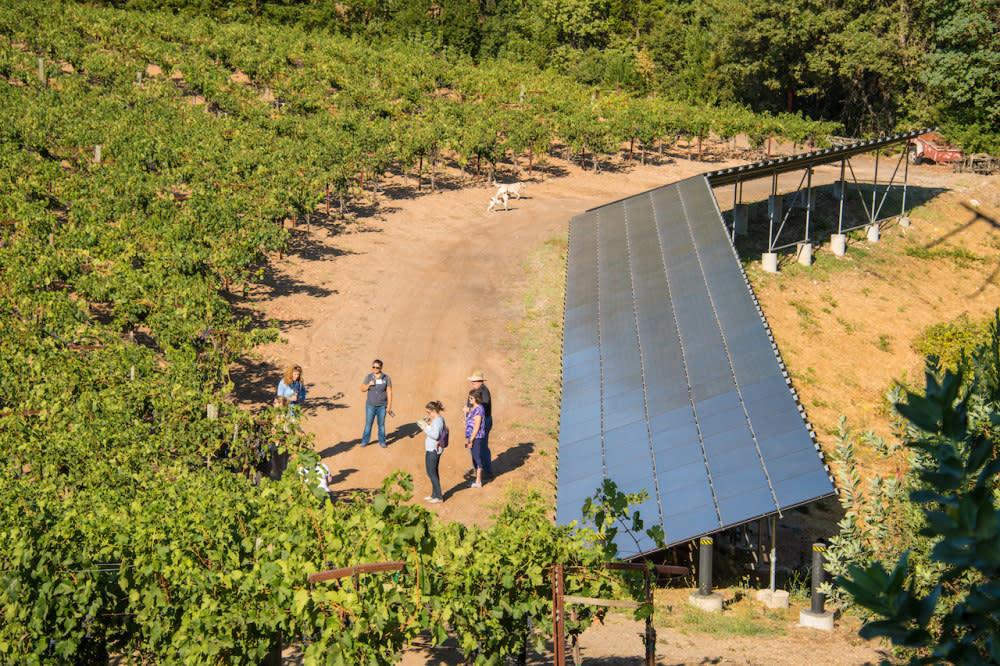 Solar arrays in Napa Valley vineyard