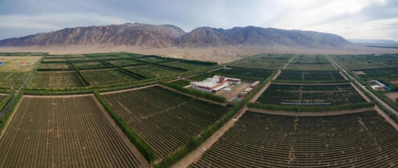 Tiansai Vineyards, China