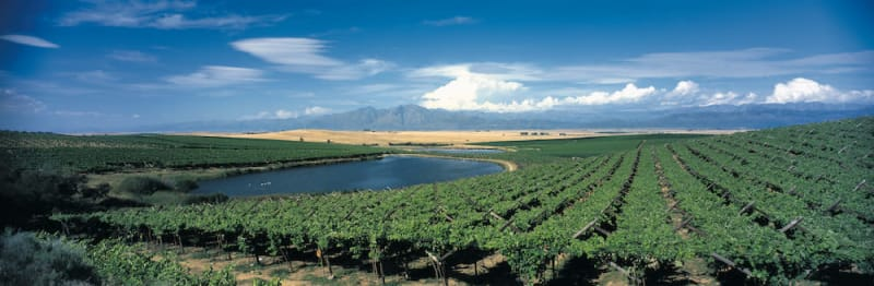 South Africa Celebrates 360 Years of Winemaking